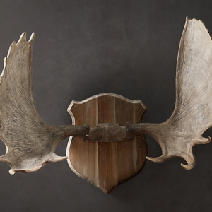 ANTLERS: TIRED OR INSPIRED?