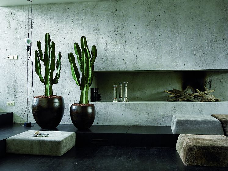 on trend succulents and cacti for interiors vkvvisuals